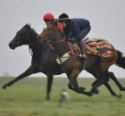 Candycakes - in training with Michael Bell on gallops, purchased for James Acheson by Brian Grsasick Bloodstock as a yearling