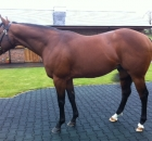 Equiano at Newsells Stud 2012