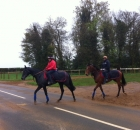 Evoke followed by Magique, both in training with Jeremy Noseda and purchased as yearlings by Brian Grassick Bloodstock in 2011 for Yvonne Jacques