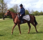 Spicy - in training with Marco Botti on Newmarket gallops, purchased by Brian Grassick Bloodstock for Yvonne Jacques as a foal 2010